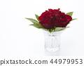 花朵 花卉 花 44979953