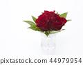 花朵 花卉 花 44979954