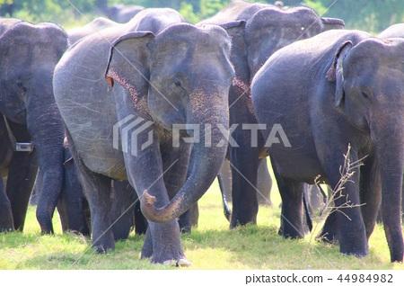 Wild elephant sri lanka 44984982