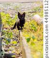 검은 고양이 고양이 44985112