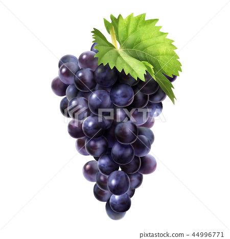 Isolated dark grape design element 44996771