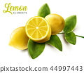 Lemon and green leaves elements 44997443
