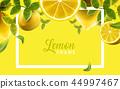 檸檬 綠葉 向量 44997467
