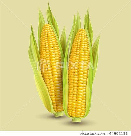 Fresh corncob design element 44998131