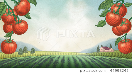 Tomato orchard background 44998245