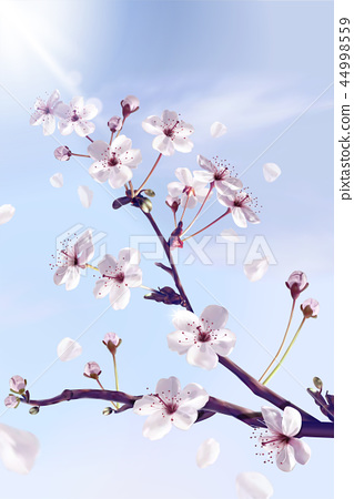 Cherry blossoms background 44998559