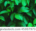 leaves, green, background 45007973