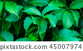 leaves, green, background 45007974