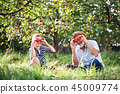 A senior man with grandson having fun when picking apples in orchard in autumn. 45009774