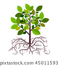 Tree with Roots Vector 45011593