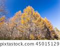 Niigata ·ต้นสนชนิดหนึ่งสีเหลือง 45015129