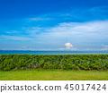 Bush fence, lawn, sky, sea 45017424