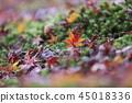 Fallen leaves 45018336