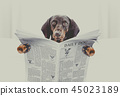 dog reading newspaper 45023189