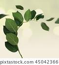 开花框架,花邀请,五颜六色的花邀请 45042366