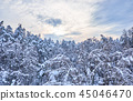 Winter view landscape with trees covered with snow 45046470