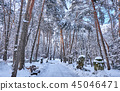 Winter park background with trees 45046471