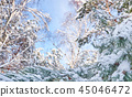 Winter background with pine tree branch 45046472