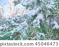 Winter background with pine tree branch  45046473