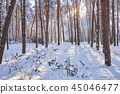 Winter park background with trees 45046477