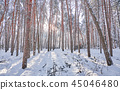 Trees in winter park. 45046480
