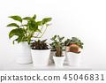 Houseplants in modern flowerpots 45046831