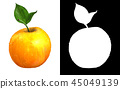 Apple fruit with alpha channel 45049139