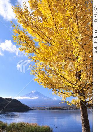 Ginkgo and Mt. Fuji-7742 45049876