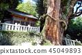 큰 나무, 삼나무, 신사 45049893