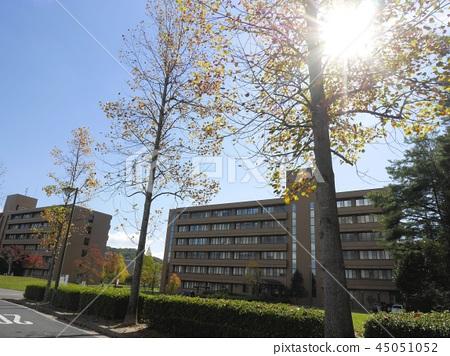 Hiroshima University Faculty of Literature Higashihiroshima Campus Hiroshima University 45051052
