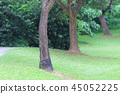 the nature of background at outdoor 45052225