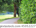 the nature of background at outdoor 45052227