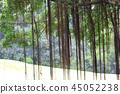 Beautiful banyan tree inhong kong 45052238