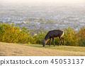 와카 쿠사 산의 사슴 45053137