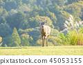 와카 쿠사 산의 사슴 45053155