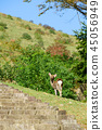 와카 쿠사 산의 사슴 45056949