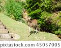 와카 쿠사 산의 사슴 45057005