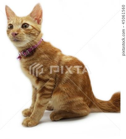 Cat 45061560