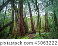 Hike in Hawaii 45063222