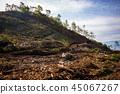 삼림 벌채 45067267