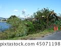 台风破坏崩塌的树木 45071198