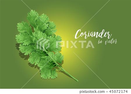 Coriander 45072174