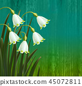 Floral background. Spring flowers. Snowflakes. 45072811