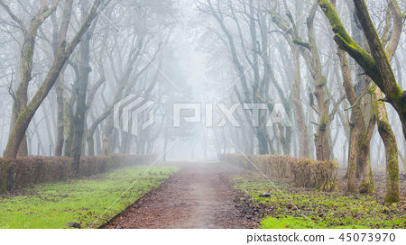 gloomy park with naked trees in fog 45073970