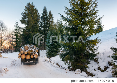 truck transporting wood through forest 45074010