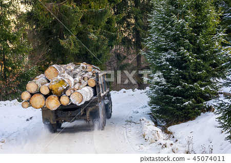 truck transporting wood through forest 45074011