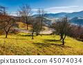 tree, hill, mountain 45074034
