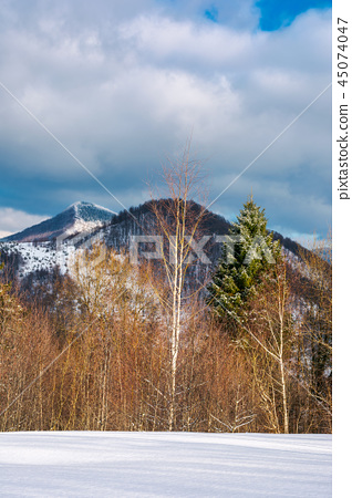 lovely winter scenery in mountains 45074047