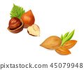 Hazelnuts almonds with leaves 45079948