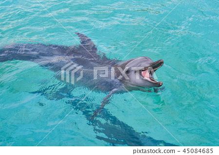 海豚 45084685